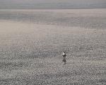 Alibag Ocean