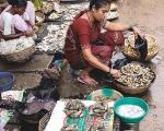 Karwar Fish Market