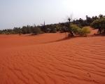 Theri Soil